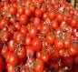 البصرة.. تحقيق قفزة في انتاج محصول الطماطم بالزبير