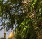 العتبة العباسية: زرعنا آلاف الأشجار في شوارع كربلاء لتقليل التلوث البيئي (صور)