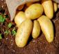 وزارة الزراعة توجه نداء إلى المنافذ والسيطرات بشأن محصول البطاطا