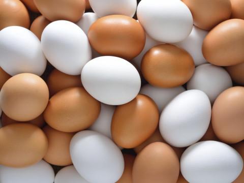 الزراعة تحدد سبب فوران أسعار البيض وتعلن موقفاً جديداً بشأن الاستيراد